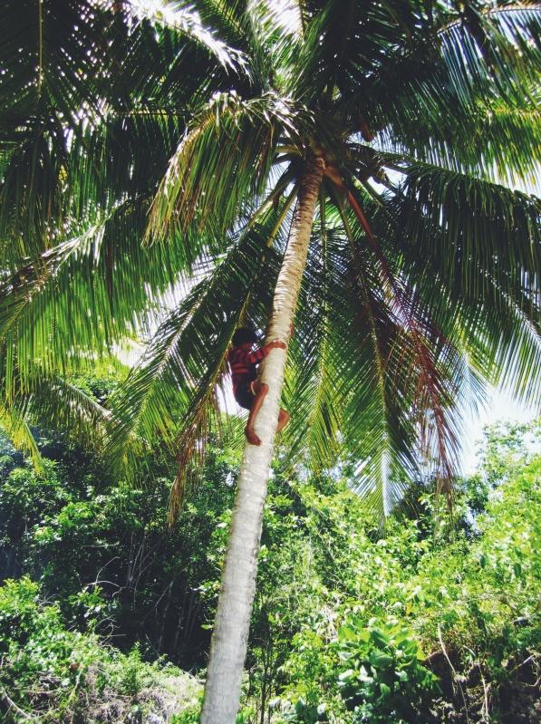 Ah toe, kunnen we verse kokosnoot eten bij onze lunch? Okido!