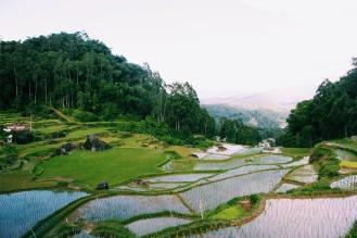 Adembenemende rijstvelden rondom Rantepao