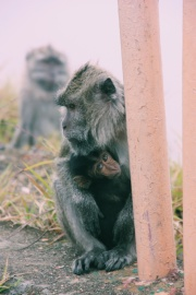 De bewoners van de Kelimutu up close
