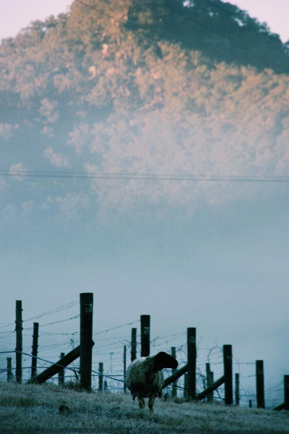 De ochtendzon ontdooit de witte wijngaarden van Hunter Valley