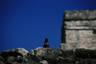 De iguana's zijn er de baas