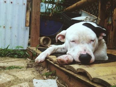 Verdenergia, met alle huisdieren, zoals Chapa de hond...