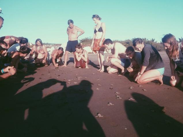 Een paar uur na de geboorte worden de zeeschildpadjes naar de zee gejuichd!